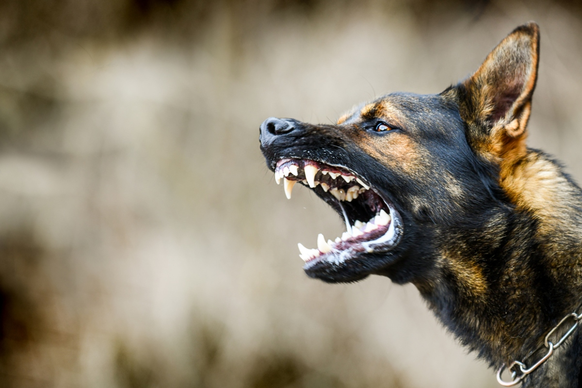 Article image for Wagga Wagga woman charged for coughing and releasing dogs on police