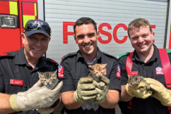 Regional firefighters' pawsitively fur-raising rescue