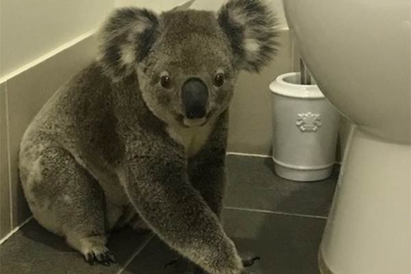 Article image for Listener captures photos of adorable visitor