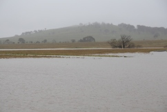 A blessing and a blight: Heavy rain and storms put bumper harvest in jeopardy