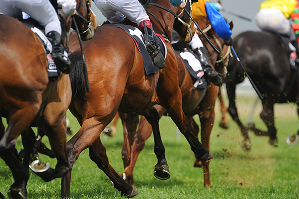 Article image for Australia's richest race to kick off in front of 11,000 people