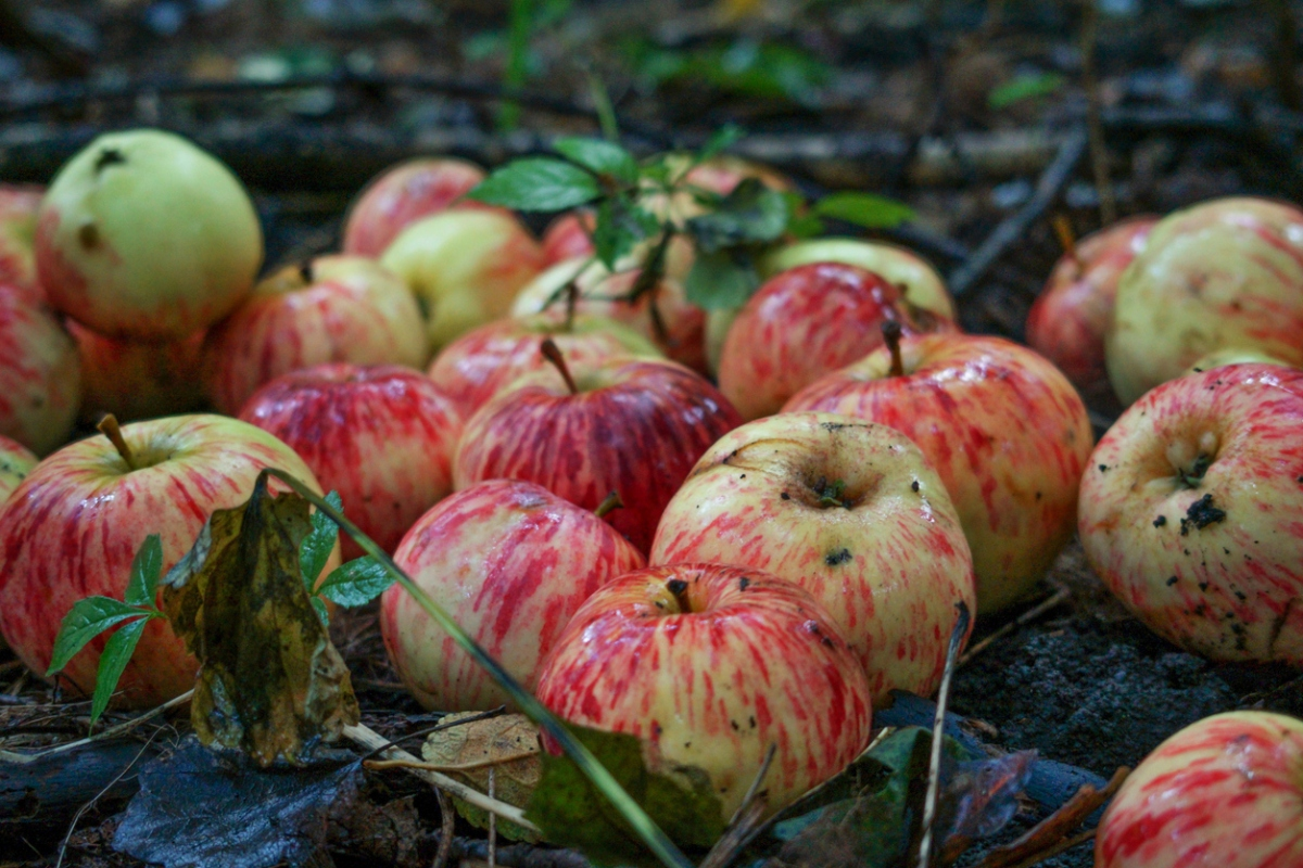 Article image for Fears more crops will be left to rot in Australia's food bowls