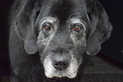 New book shows old dogs can learn new tricks
