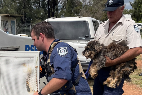 Article image for RSPCA seizes 79 dogs from NSW puppy farm