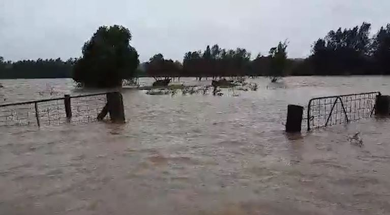Article image for WATCH | Cow rescued from NSW floodwaters