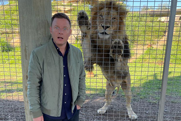 Article image for WATCH   Ben Fordham comes face-to-face with lion at Sydney Zoo