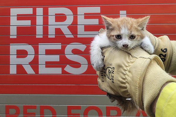 Article image for Stray kitten gets a helping hand from Sydney firies